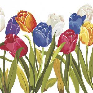 Tulip - Hybrid